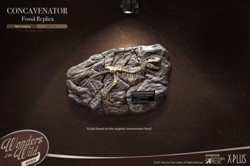 Wonders of the Wild Mini Replica Concavenator Fossil 31 cm